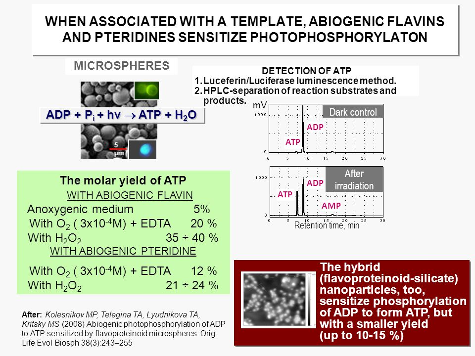 WHEN ASSOCIATED WITH A TEMPLATE, ABIOGENIC FLAVINS AND PTERIDINES SENSITIZE PHOTOPHOSPHORYLATON MICROSPHERES 5 µm ADP + P i + hν  ATP + H 2 O mV ADP Dark control ATP After irradiation ADP Retention time, min AMP ATP DETECTION OF ATP 1.Luceferin/Luciferase luminescence method.