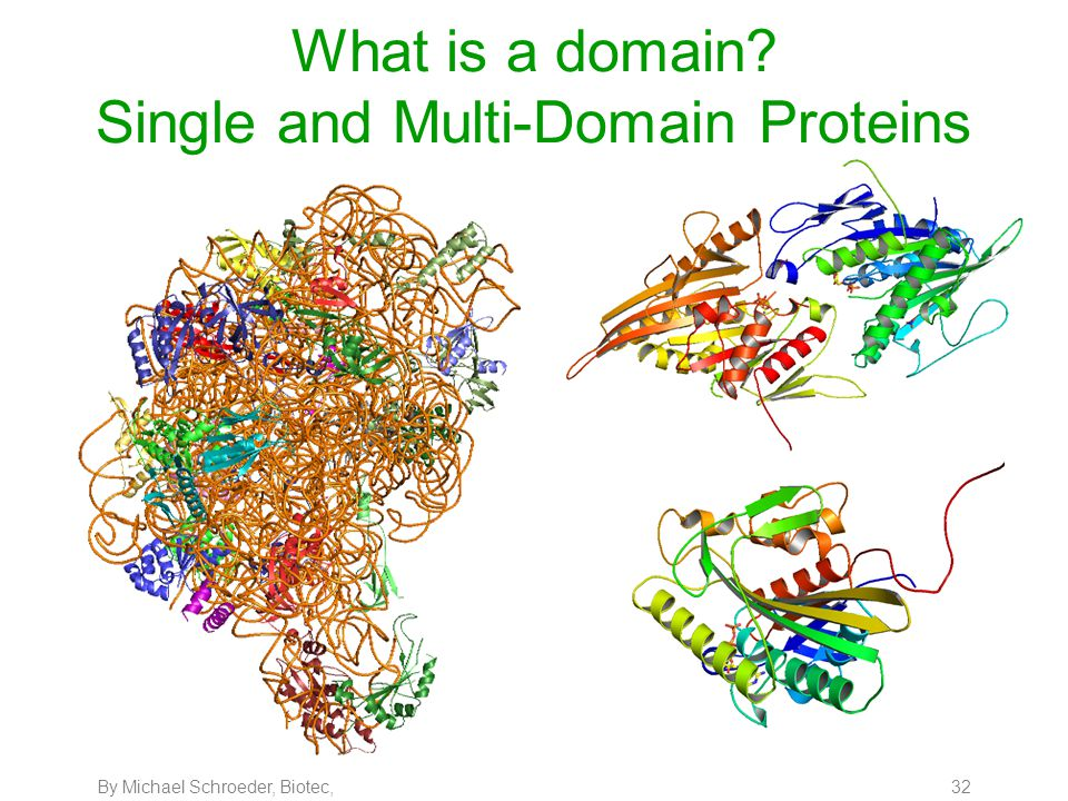 By Michael Schroeder, Biotec, 32 What is a domain? Single and Multi-Domain Proteins