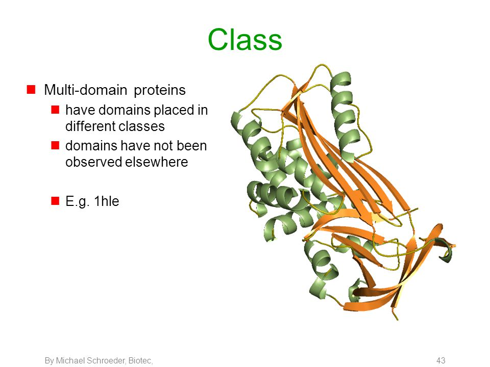 By Michael Schroeder, Biotec, 43 Class nMulti-domain proteins nhave domains placed in different classes ndomains have not been observed elsewhere nE.g