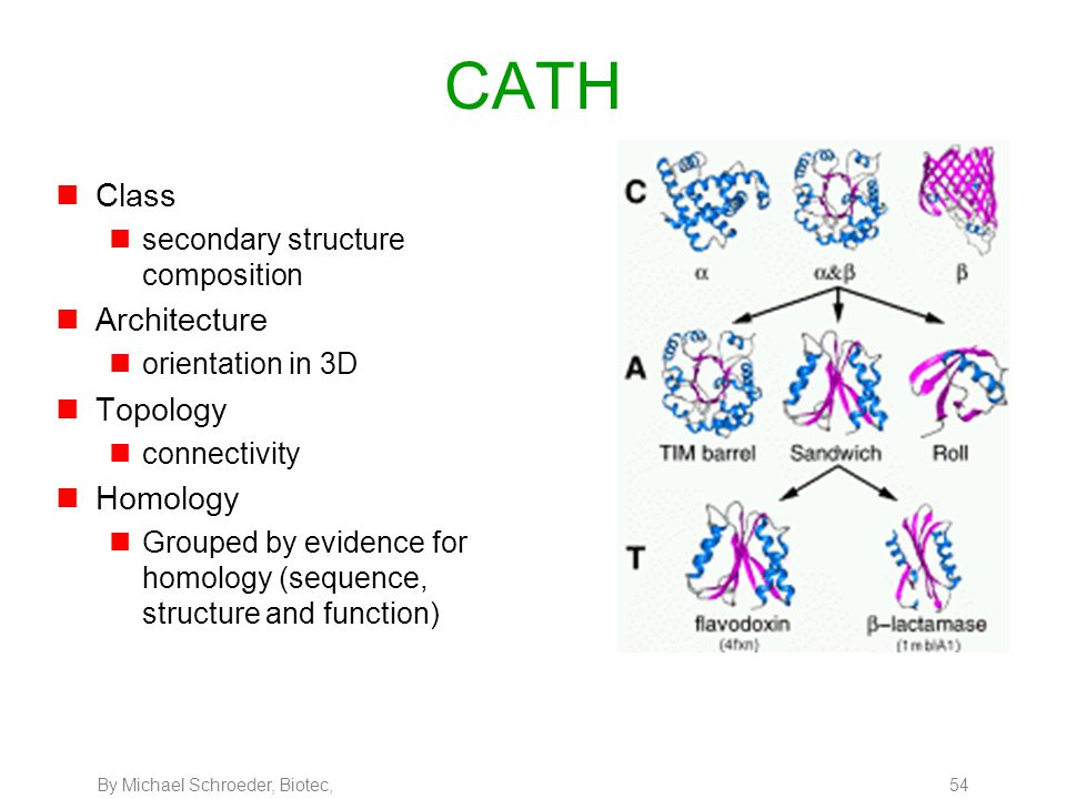 By Michael Schroeder, Biotec, 54 CATH nClass nsecondary structure composition nArchitecture norientation in 3D nTopology nconnectivity nHomology nGrou