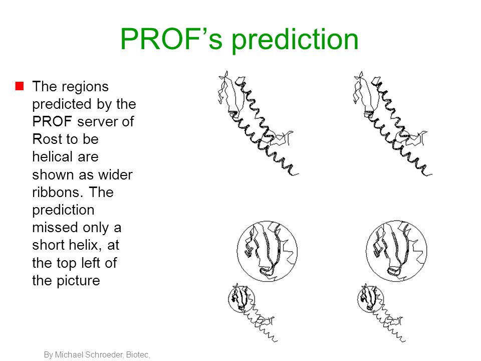 By Michael Schroeder, Biotec, 69 PROF's prediction nThe regions predicted by the PROF server of Rost to be helical are shown as wider ribbons. The pre