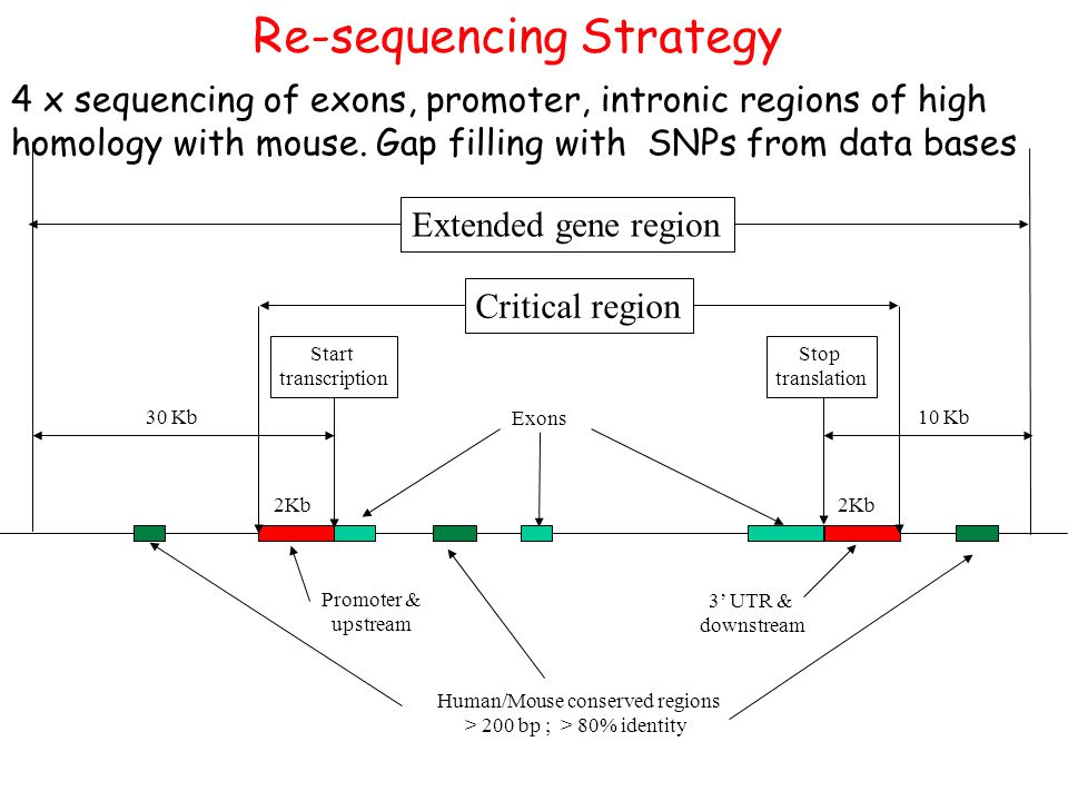 Re-sequencing Strategy Exons 2Kb Human/Mouse conserved regions > 200 bp ; > 80% identity 30 Kb10 Kb Promoter & upstream 3' UTR & downstream Start tran