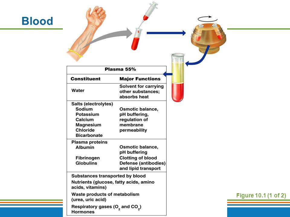 Copyright © 2009 Pearson Education, Inc., publishing as Benjamin Cummings Figure 10.1 (1 of 2) Blood