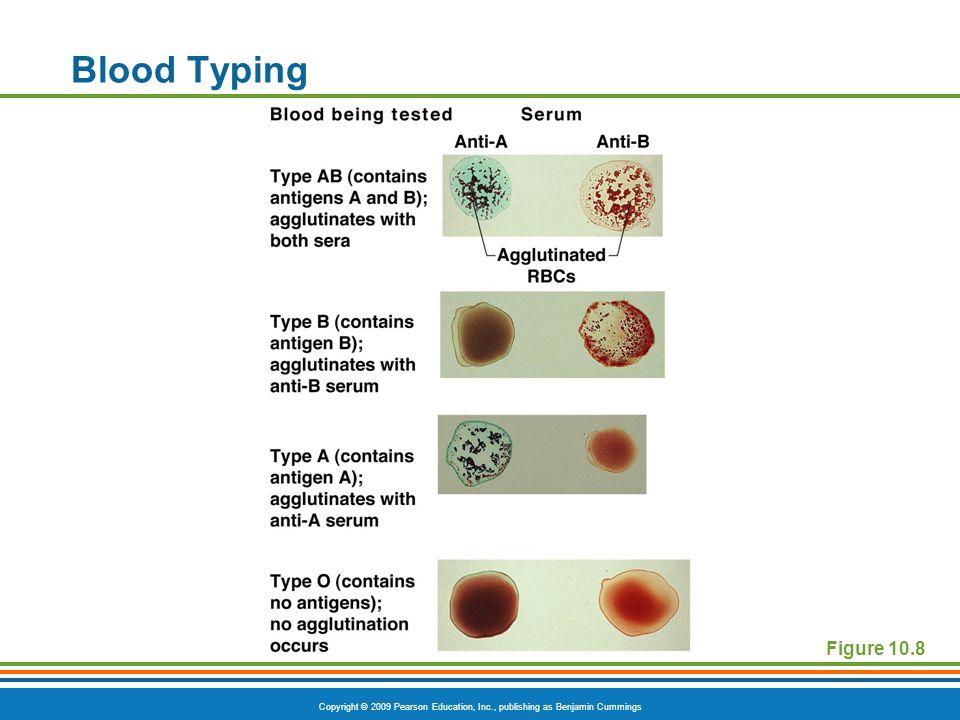 Copyright © 2009 Pearson Education, Inc., publishing as Benjamin Cummings Blood Typing Figure 10.8
