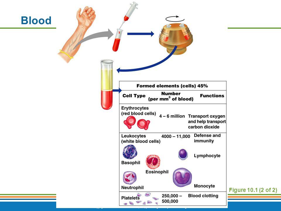 Copyright © 2009 Pearson Education, Inc., publishing as Benjamin Cummings Figure 10.1 (2 of 2) Blood