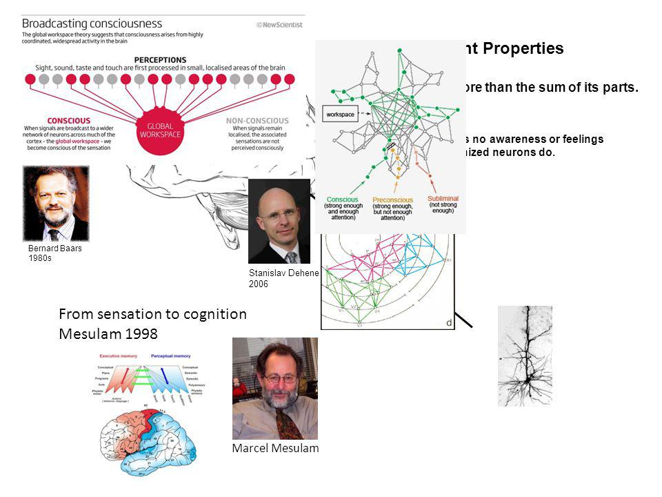 Emergent Properties One neuron has no awareness or feelings but many organized neurons do.