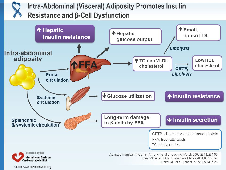 Source: www.myhealthywaist.org Intra-Abdominal (Visceral) Adiposity Promotes Insulin Resistance and β-Cell Dysfunction Adapted from Lam TK et al. Am J