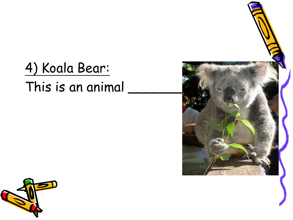 4) Koala Bear: This is an animal ____________