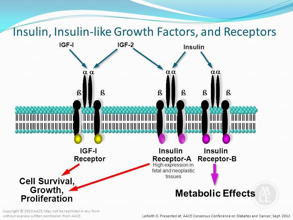 Insulin, Insulin-like Growth Factors, and Receptors LeRoith D. Presented at: AACE Consensus Conference on Diabetes and Cancer; Sept. 2012 Metabolic Ef