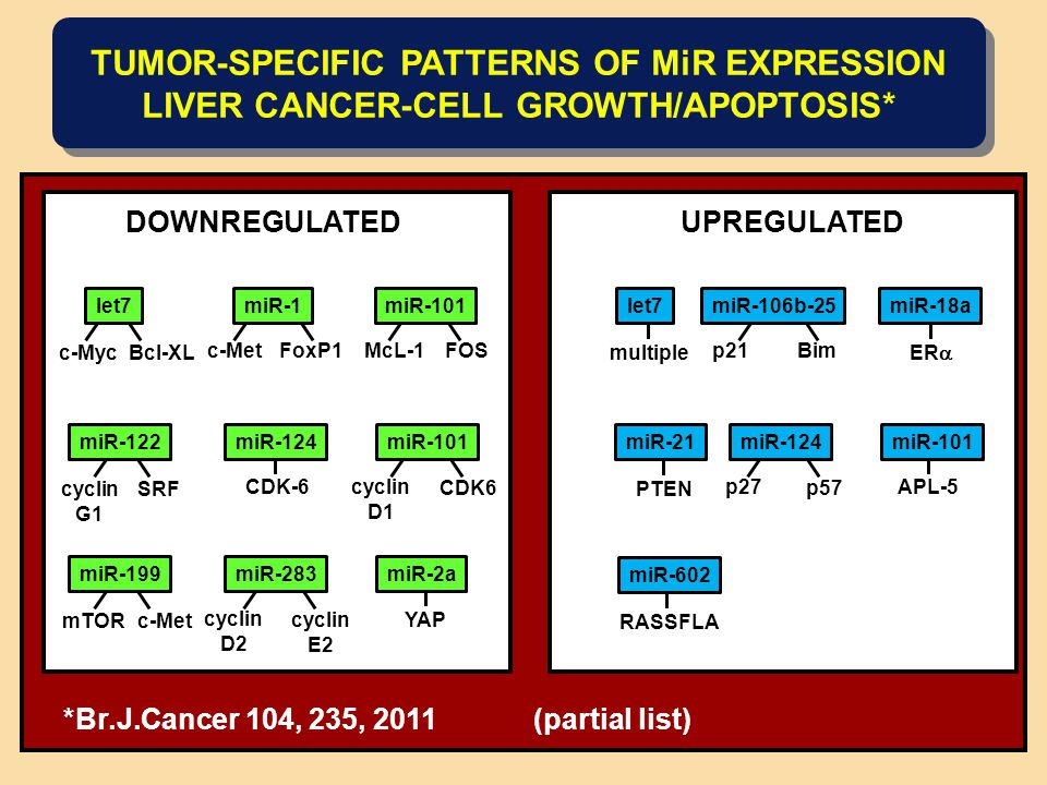 TUMOR-SPECIFIC PATTERNS OF MiR EXPRESSION LIVER CANCER-CELL GROWTH/APOPTOSIS* DOWNREGULATEDUPREGULATED let7miR-1 c-MycBcl-XL miR-101 c-MetFoxP1McL-1FOS miR-122 cyclin G1 SRF miR-101 CDK-6cyclin D1 miR-124 CDK6 miR-199 mTORc-Met cyclin D2 miR-283 cyclin E2 miR-2a YAP miR-106b-25 p21Bim APL-5p27 miR-124 p57 multiple let7 ER  miR-18a PTEN miR-21miR-101 RASSFLA miR-602 *Br.J.Cancer 104, 235, 2011 (partial list)