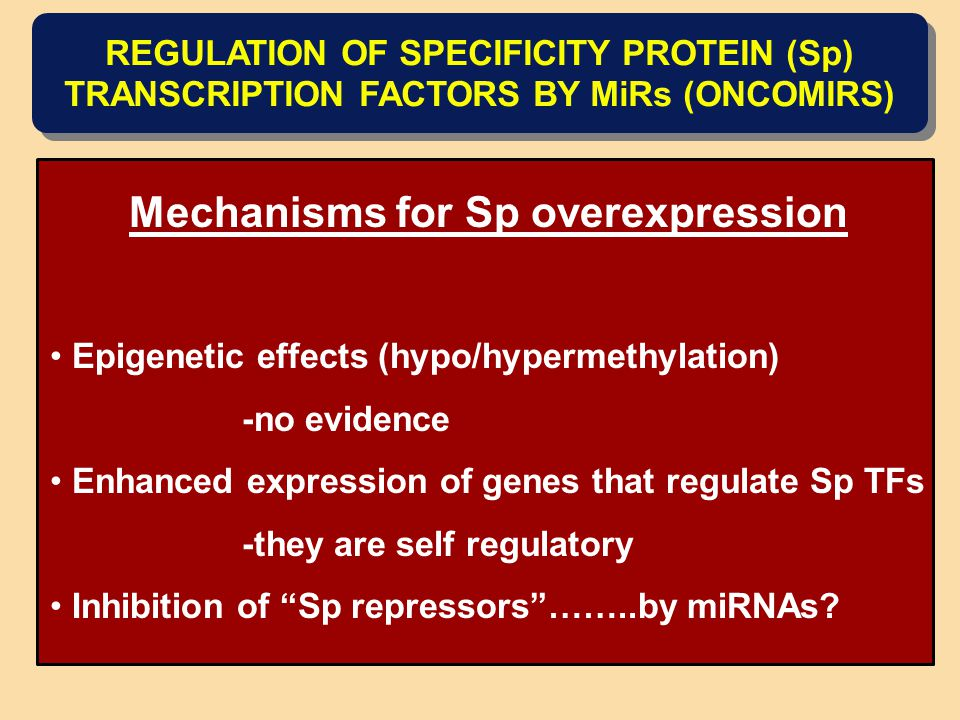 Mechanisms for Sp overexpression Epigenetic effects (hypo/hypermethylation) -no evidence Enhanced expression of genes that regulate Sp TFs -they are self regulatory Inhibition of Sp repressors ……..by miRNAs.