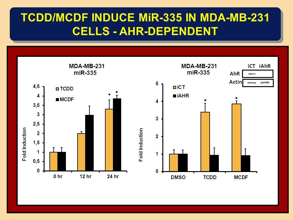 TCDD/MCDF INDUCE MiR-335 IN MDA-MB-231 CELLS - AHR-DEPENDENT miR-335 AhR Actin iCT iAhR MDA-MB-231 miR-335 MDA-MB-231      