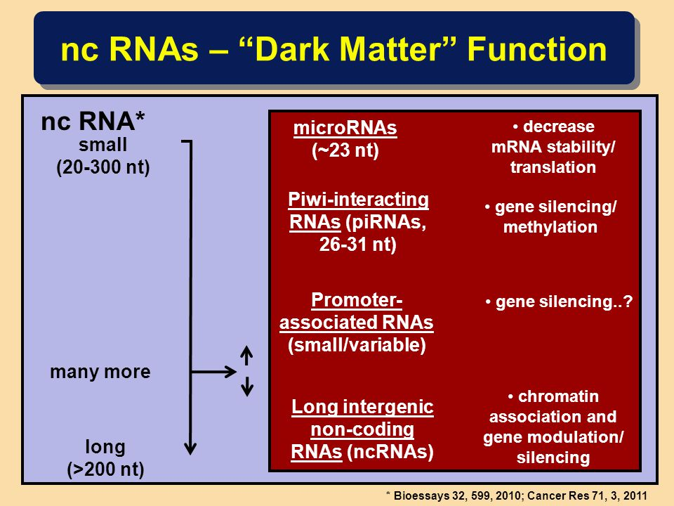 nc RNAs – Dark Matter Function nc RNA* long (>200 nt) * Bioessays 32, 599, 2010; Cancer Res 71, 3, 2011 chromatin association and gene modulation/ silencing small (20-300 nt) microRNAs (~23 nt) decrease mRNA stability/ translation Piwi-interacting RNAs (piRNAs, 26-31 nt) gene silencing/ methylation Promoter- associated RNAs (small/variable) gene silencing...