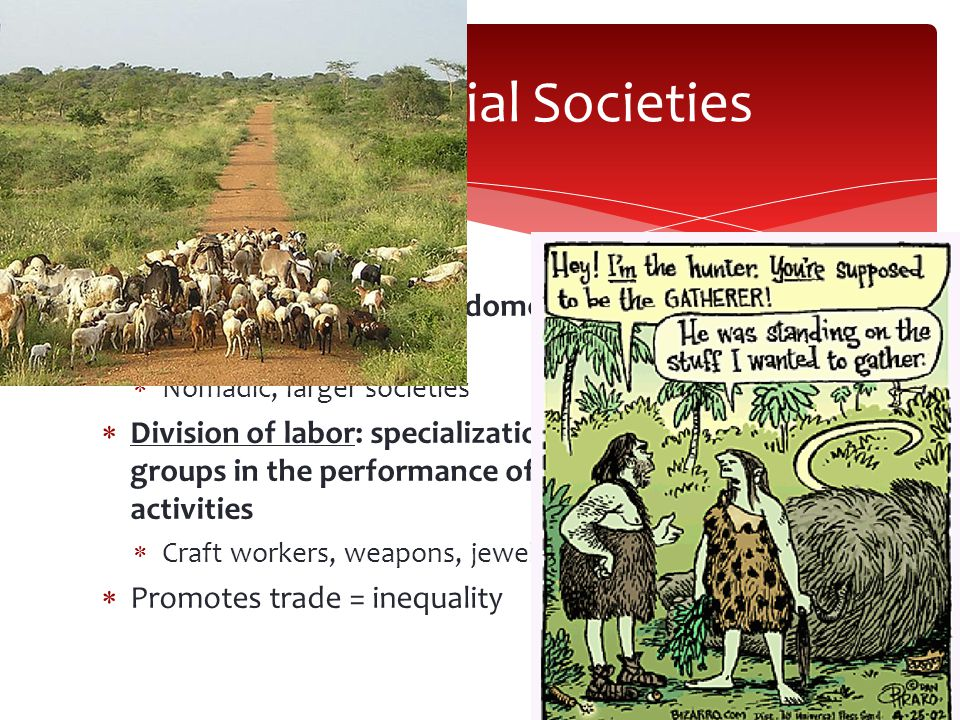  Pastoral society: rely on domesticated herd animals to meet food needs  Nomadic, larger societies  Division of labor: specialization of individuals or groups in the performance of specific economic activities  Craft workers, weapons, jewelry, farmer, smith  Promotes trade = inequality Preindustrial Societies