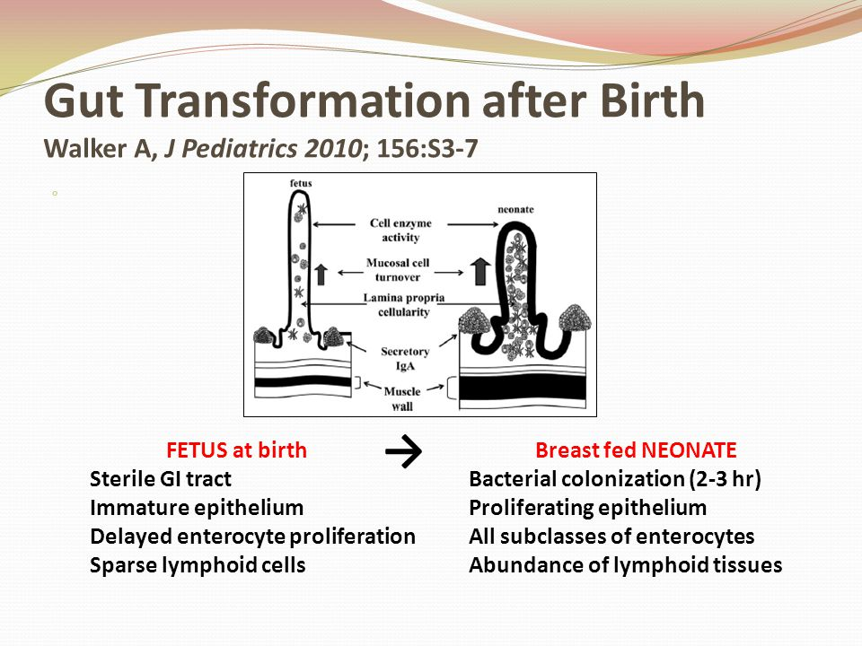 Gut Transformation after Birth Walker A, J Pediatrics 2010; 156:S3-7 o FETUS at birth Sterile GI tract Immature epithelium Delayed enterocyte prolifer