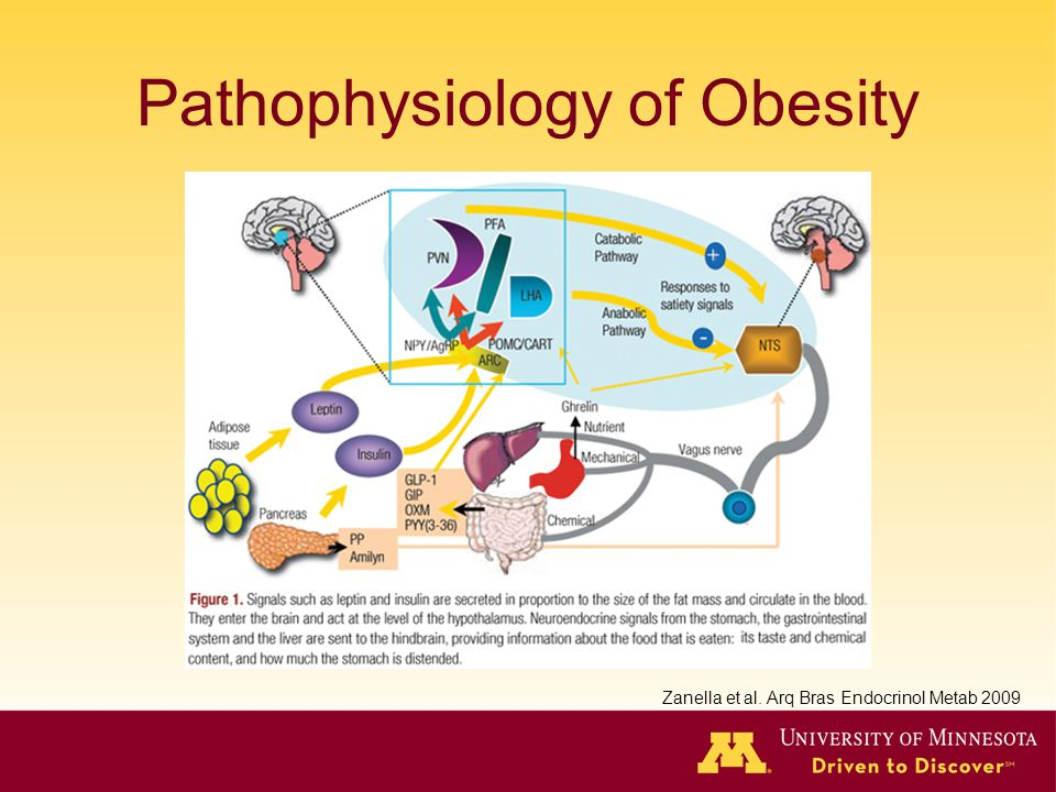 Pathophysiology of Obesity Zanella et al. Arq Bras Endocrinol Metab 2009