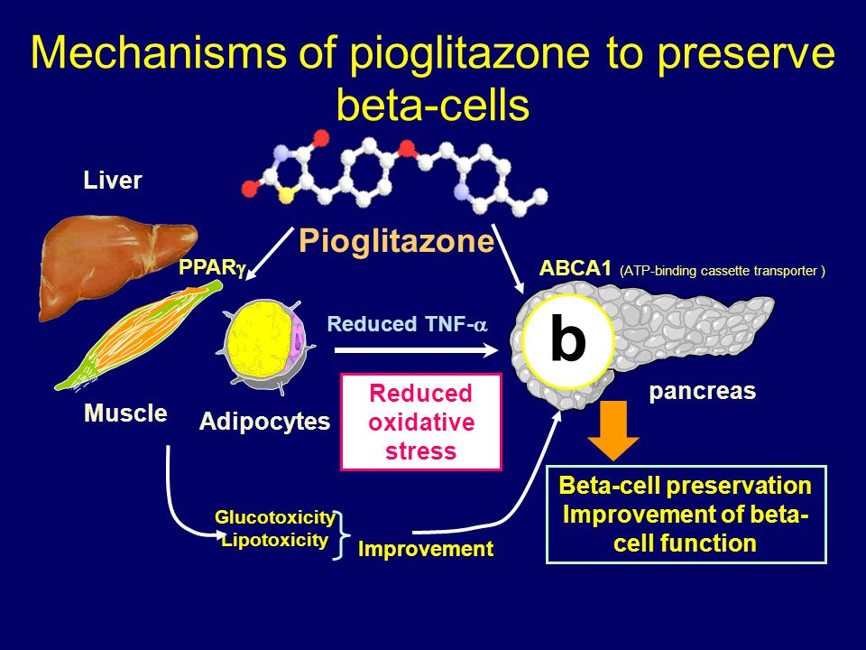 Mechanisms of pioglitazone to preserve beta-cells Adipocytes Muscle Pioglitazone Beta-cell preservation Improvement of beta- cell function pancreas Reduced TNF-  Reduced oxidative stress Glucotoxicity Lipotoxicity Improvement Liver b ABCA1 (ATP-binding cassette transporter ) PPAR 