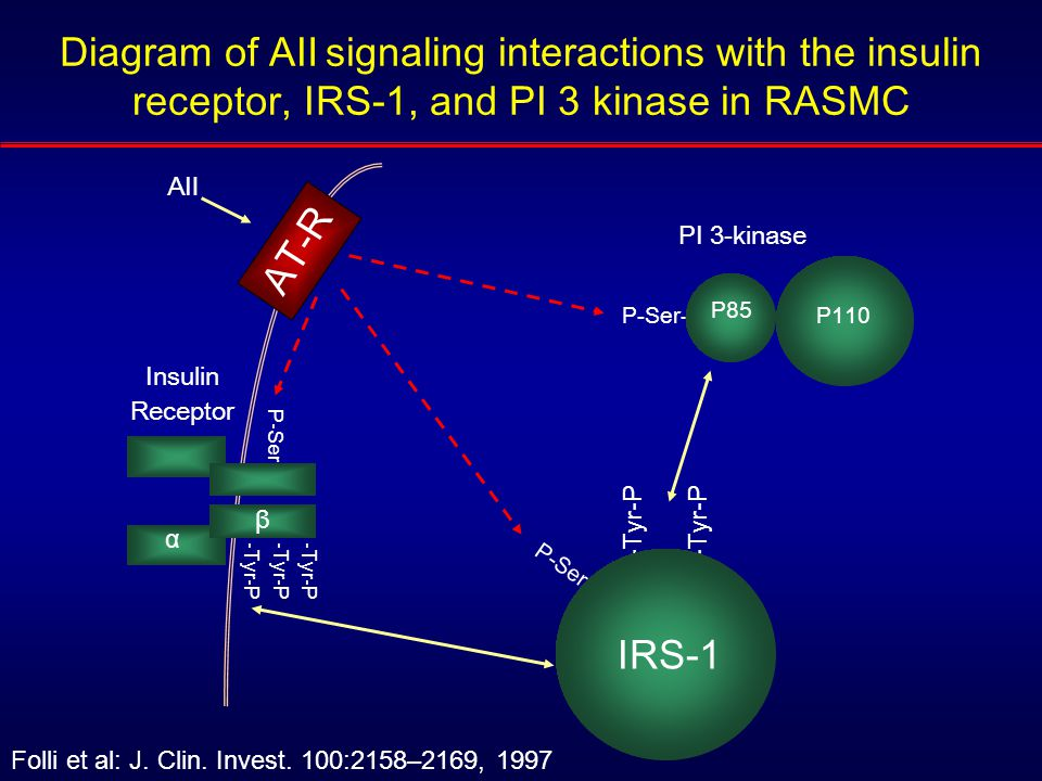 P110 PI 3-kinase P-Ser- -Tyr-P P-Ser- AⅡAⅡ AT-R P-Ser- -Tyr-P α β Insulin Receptor IRS-1 P85 Diagram of A Ⅱ signaling interactions with the insulin receptor, IRS-1, and PI 3 kinase in RASMC Folli et al: J.