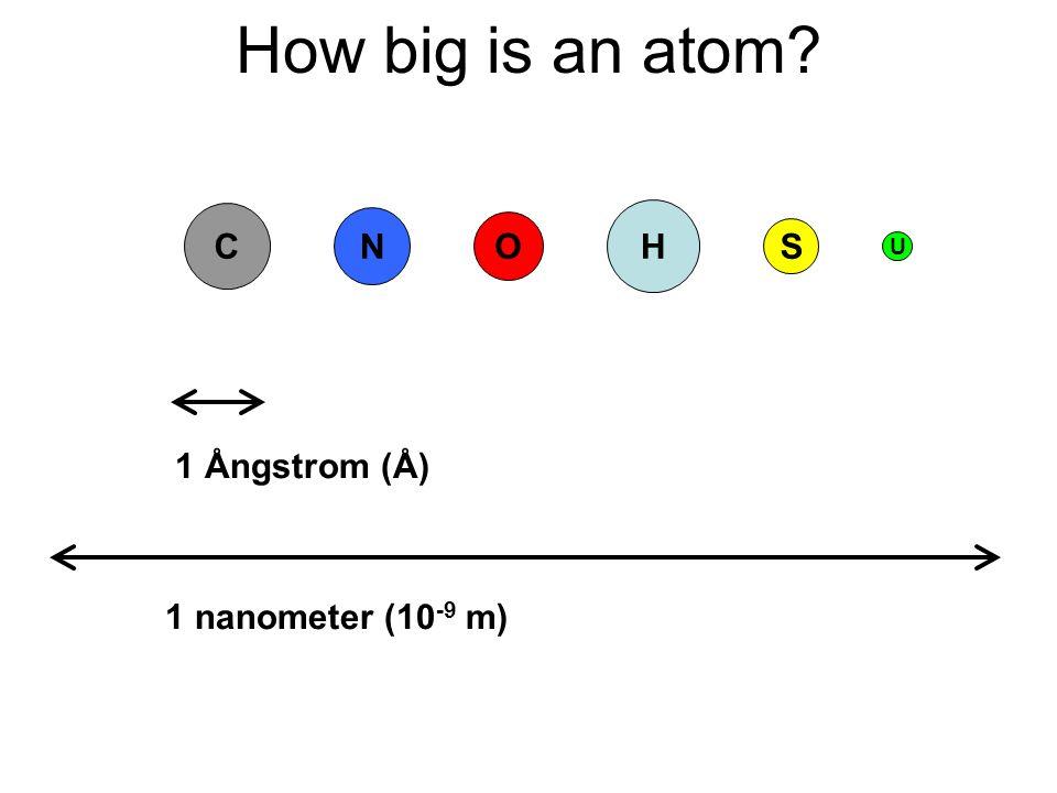 How big is an atom C 1 Ångstrom (Å) 1 nanometer (10 -9 m) N O S H U