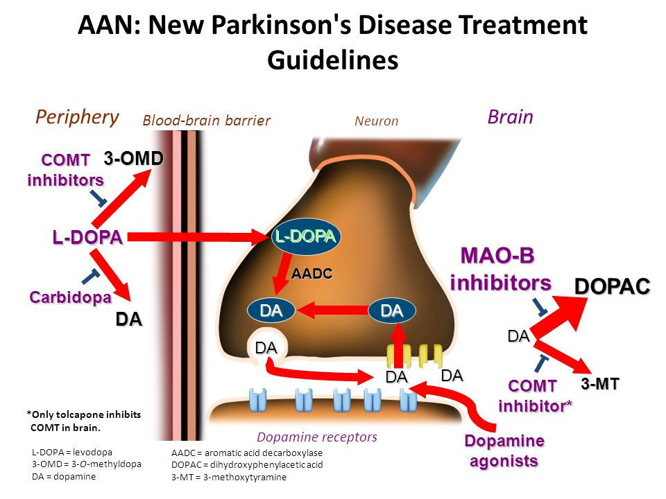 Dopamine receptors DA L-DOPA 3-OMD DA Dopamineagonists COMT inhibitors Carbidopa MAO-B inhibitors inhibitors DOPAC DA 3-MT DA DA AADC DA COMT inhibitor* inhibitor* L-DOPA DA DA Blood-brain barrier PeripheryBrain Neuron AAN: New Parkinson s Disease Treatment Guidelines *Only tolcapone inhibits COMT in brain.