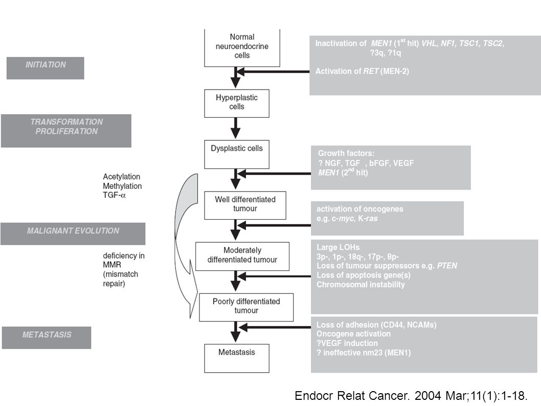 Endocr Relat Cancer. 2004 Mar;11(1):1-18.
