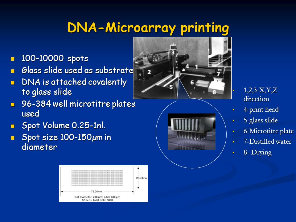 DNA-Microarray printing 100-10000 spots 100-10000 spots Glass slide used as substrate Glass slide used as substrate DNA is attached covalently to glass slide DNA is attached covalently to glass slide 96-384 well microtitre plates used 96-384 well microtitre plates used Spot Volume 0.25-1nl.