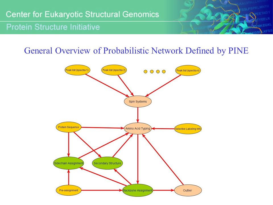 General Overview of Probabilistic Network Defined by PINE