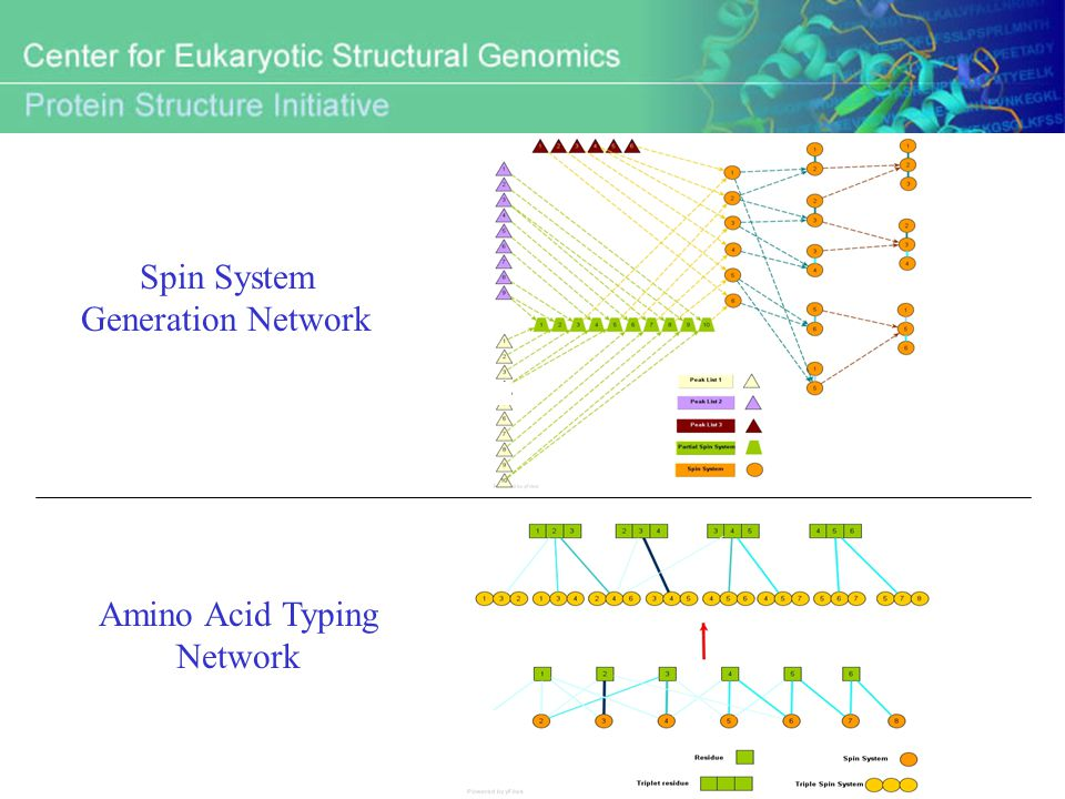 Amino Acid Typing Network Spin System Generation Network