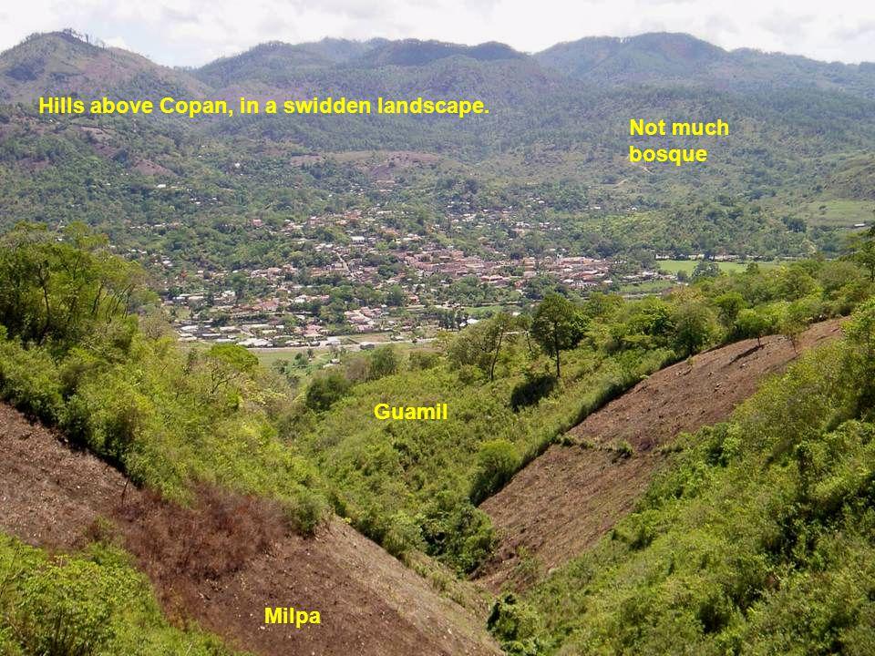 Hills above Copan, in a swidden landscape. Milpa Guamil Not much bosque