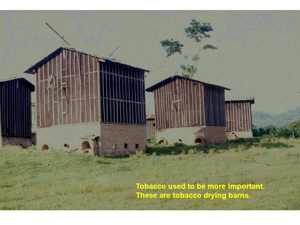 Tobacco used to be more important. These are tobacco drying barns.