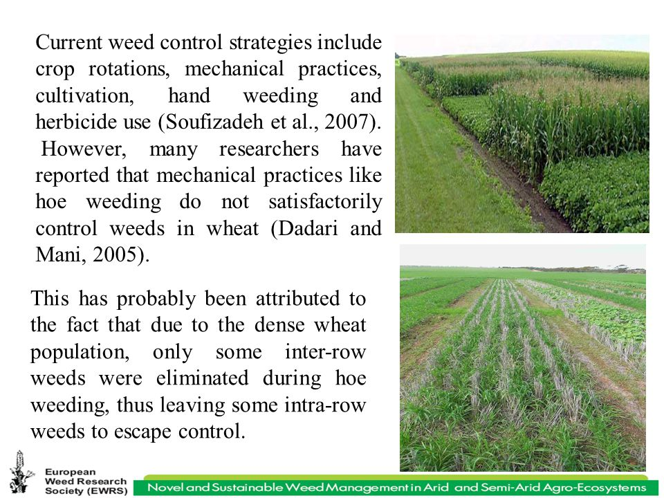 Current weed control strategies include crop rotations, mechanical practices, cultivation, hand weeding and herbicide use (Soufizadeh et al., 2007).