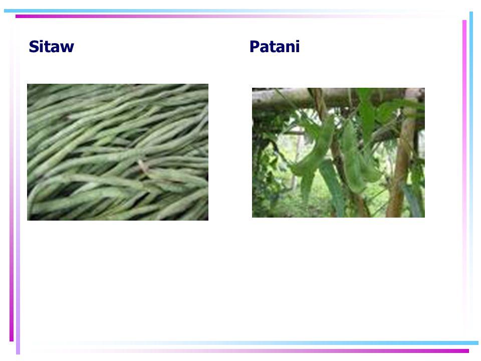 Sitaw Patani