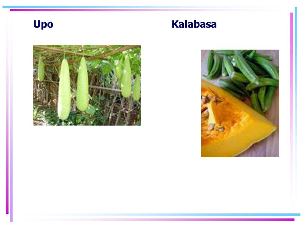 Upo Kalabasa