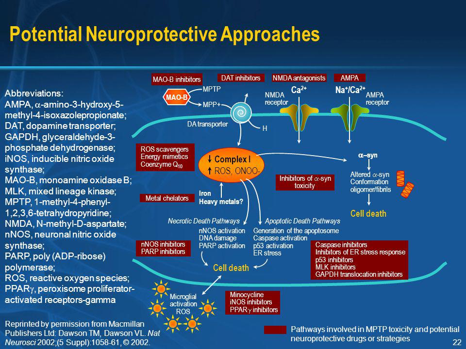 22 Potential Neuroprotective Approaches Abbreviations: AMPA,  -amino-3-hydroxy-5- methyl-4-isoxazolepropionate; DAT, dopamine transporter; GAPDH, gly