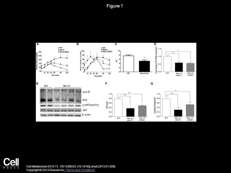 Figure 2 Cell Metabolism 2013 17, 197-209DOI: (10.1016/j.cmet.2013.01.009) Copyright © 2013 Elsevier Inc.