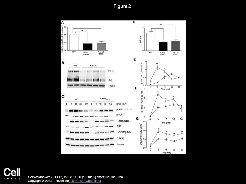 Figure 3 Cell Metabolism 2013 17, 197-209DOI: (10.1016/j.cmet.2013.01.009) Copyright © 2013 Elsevier Inc.