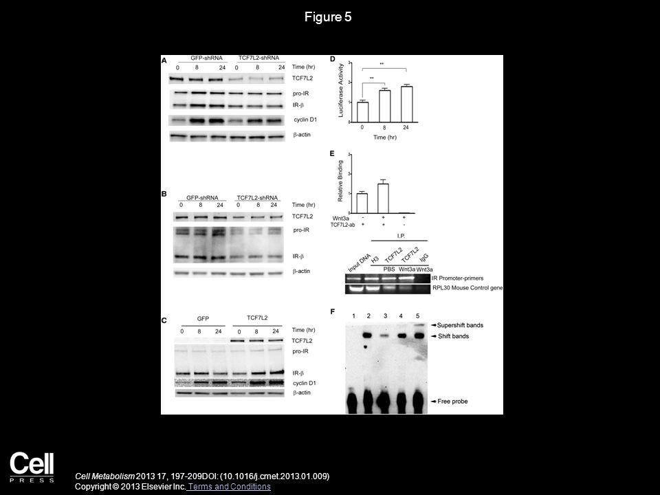 Figure 6 Cell Metabolism 2013 17, 197-209DOI: (10.1016/j.cmet.2013.01.009) Copyright © 2013 Elsevier Inc.