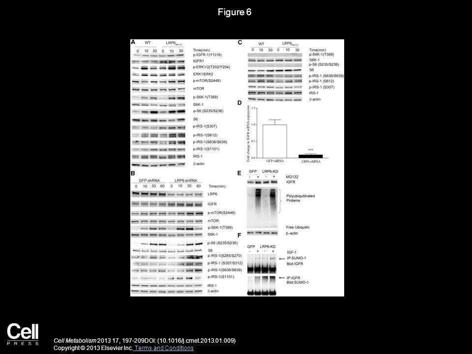 Figure 7 Cell Metabolism 2013 17, 197-209DOI: (10.1016/j.cmet.2013.01.009) Copyright © 2013 Elsevier Inc.
