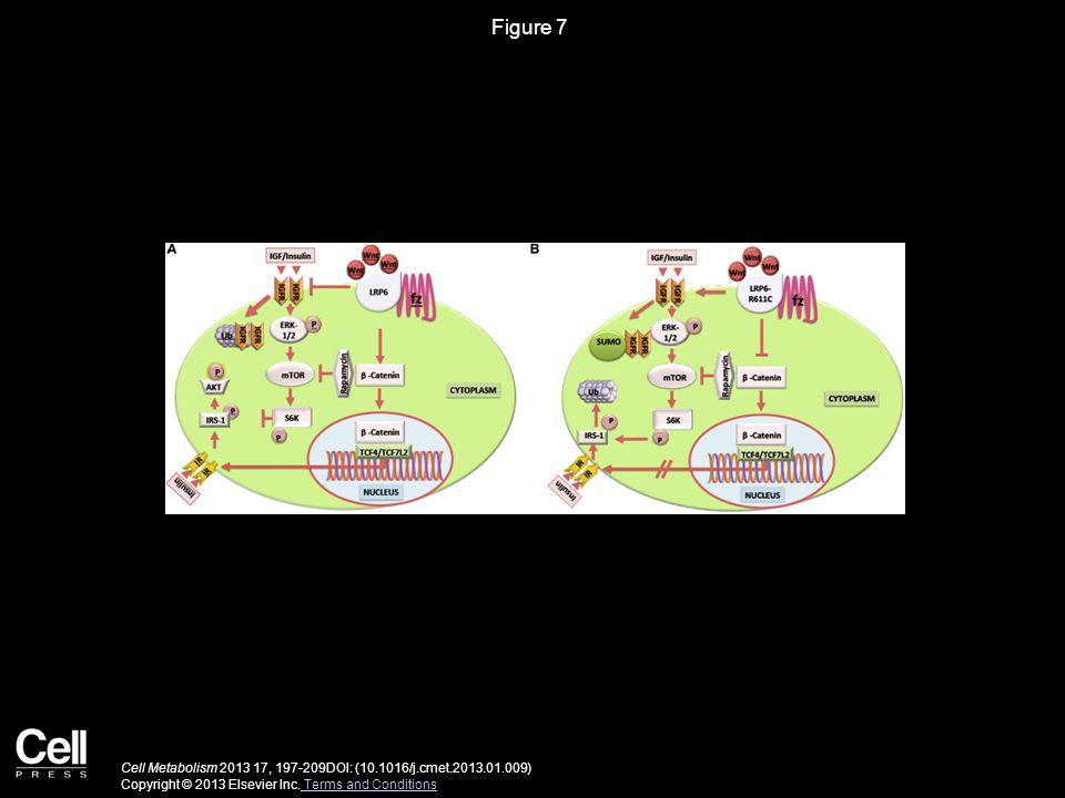 Cell Metabolism 2013 17, 197-209DOI: (10.1016/j.cmet.2013.01.009) Copyright © 2013 Elsevier Inc.