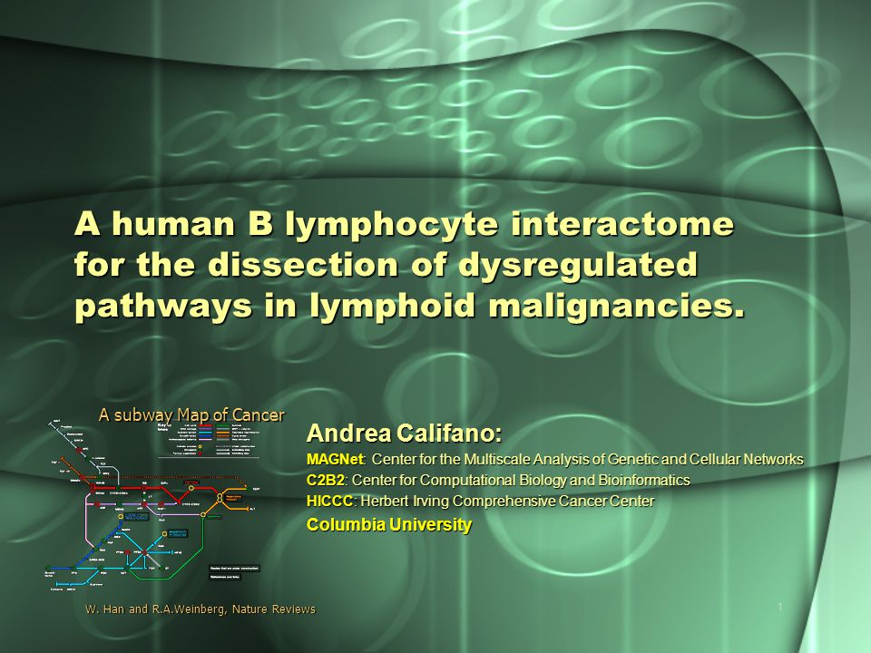 1 A human B lymphocyte interactome for the dissection of dysregulated pathways in lymphoid malignancies. Andrea Califano: MAGNet: Center for the Multi