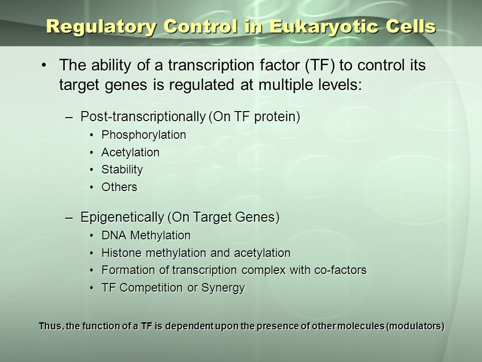Regulatory Control in Eukaryotic Cells The ability of a transcription factor (TF) to control its target genes is regulated at multiple levels:The abil