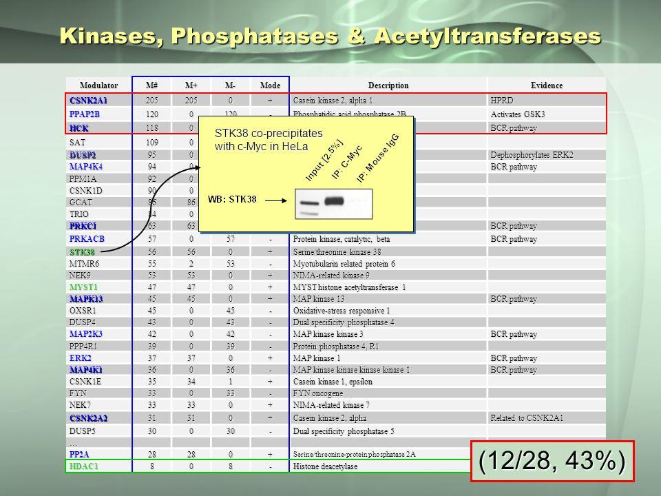 Kinases, Phosphatases & Acetyltransferases ModulatorM#M+M-ModeDescriptionEvidence CSNK2A12052050+ Casein kinase 2, alpha 1 HPRD PPAP2B1200120- Phosphatidic acid phosphatase 2B Activates GSK3 HCK1180118- Hemopoietic cell kinase BCR pathway SAT1090109- Spermidine N1-acetyltransferase DUSP295095- Dual specificity phosphatase 2 Dephosphorylates ERK2 MAP4K494094- MAP kinase kinase kinase kinase 4 BCR pathway PPM1A92092- Protein phosphatase 1A CSNK1D90090- Casein kinase 1, delta GCAT86860+ Glycine C-acetyltransferase TRIO84084- Triple functional domain PRKCI63630+ Protein kinase C, iota BCR pathway PRKACB57057- Protein kinase, catalytic, beta BCR pathway STK3856560+ Serine/threonine kinase 38 MTMR655253- Myotubularin related protein 6 NEK953530+ NIMA-related kinase 9 MYST147470+ MYST histone acetyltransferase 1 MAPK1345450+ MAP kinase 13 BCR pathway OXSR145045- Oxidative-stress responsive 1 DUSP443043- Dual specificity phosphatase 4 MAP2K342042- MAP kinase kinase 3 BCR pathway PPP4R139039- Protein phosphatase 4, R1 ERK237370+ MAP kinase 1 BCR pathway MAP4K136036- MAP kinase kinase kinase kinase 1 BCR pathway CSNK1E35341+ Casein kinase 1, epsilon FYN33033- FYN oncogene NEK733330+ NIMA-related kinase 7 CSNK2A231310+ Casein kinase 2, alpha Related to CSNK2A1 DUSP530030- Dual specificity phosphatase 5 … PP2A28280+ Serine/threonine-protein phosphatase 2A HDAC1808- Histone deacetylase (12/28, 43%) STK38 co-precipitates with c-Myc in HeLa