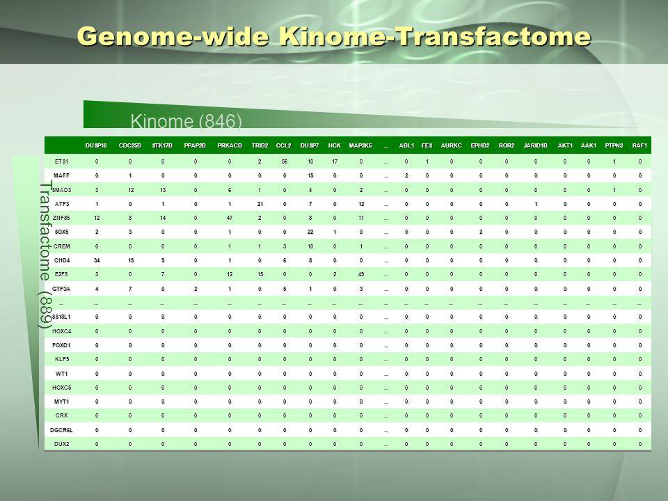 Genome-wide Kinome-Transfactome DUSP10CDC25BSTK17BPPAP2BPRKACBTRIB2CCL2DUSP7HCKMAP3K5...ABL1FESAURKCEPHB2ROR2JARID1BAKT1AAK1PTPN3RAF1 ETS10000025610170...0100000010 MAFF01000001500...2000000000 SMAD3312130610402...0000000010 ATF3101012107012...0000010000 ZNF8512814047208011...0000000000 SOX523001002210...0002000000 CREM00001131001...0000000000 CHD4341590106800...0000000000 E2F53070121500249...0000000000 GTF3A4702105103...0000000000..................................................................