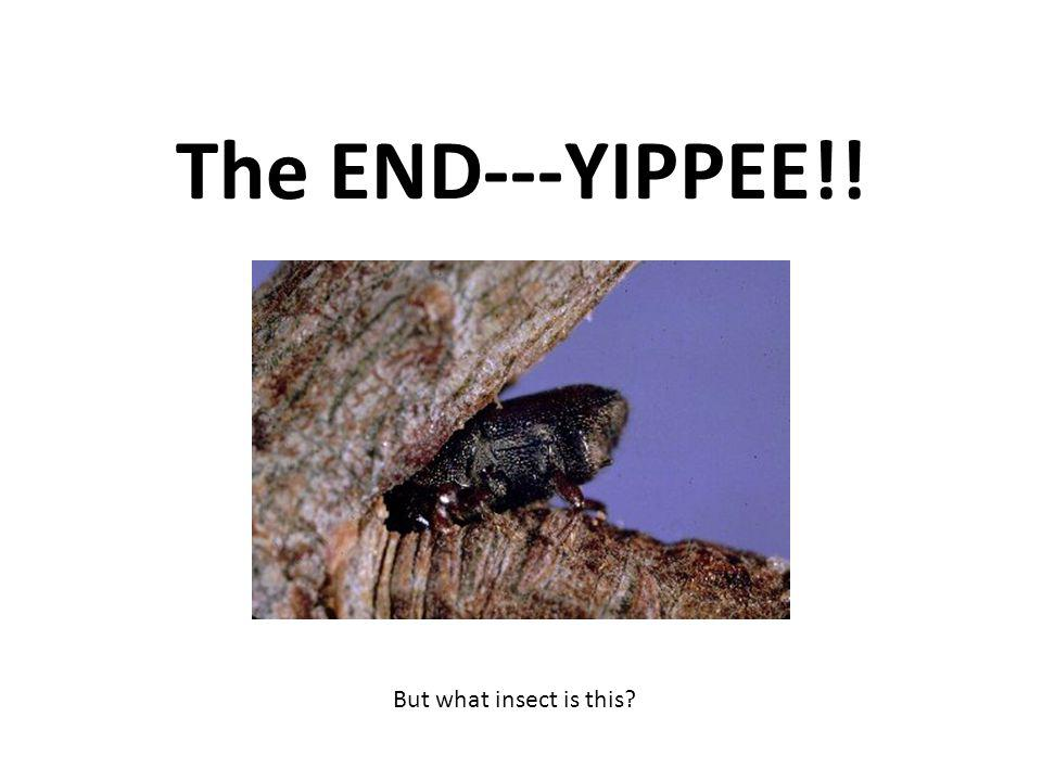 The END---YIPPEE!! But what insect is this?