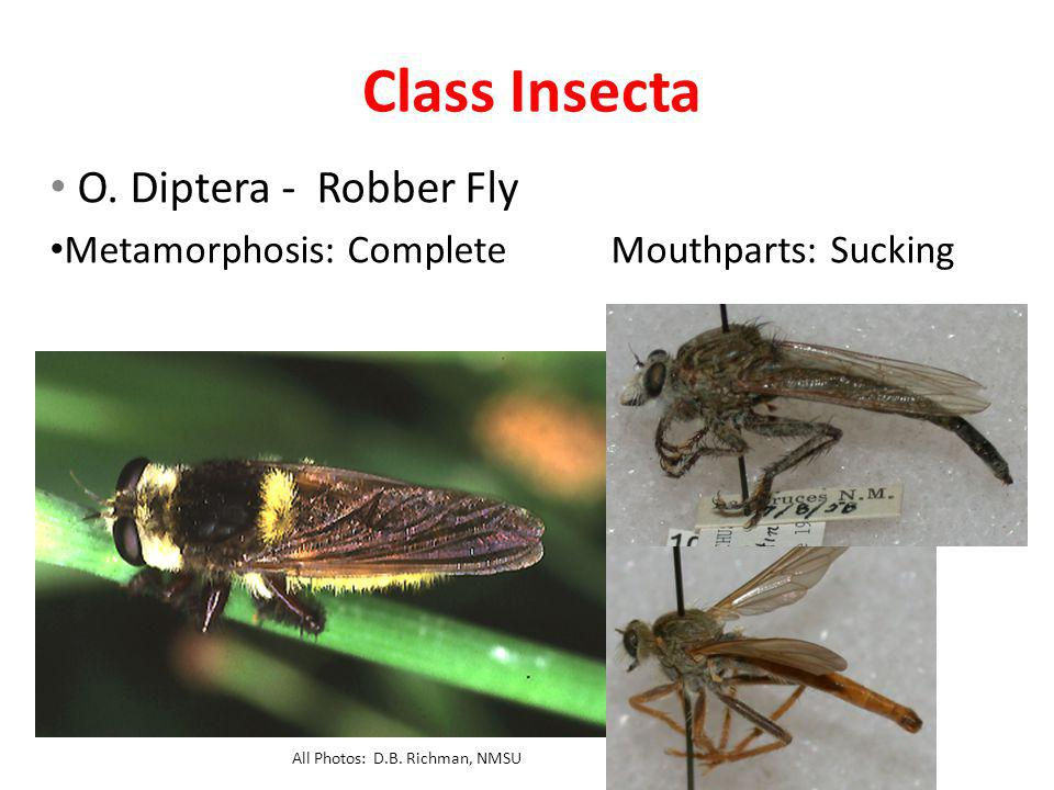 Class Insecta O.