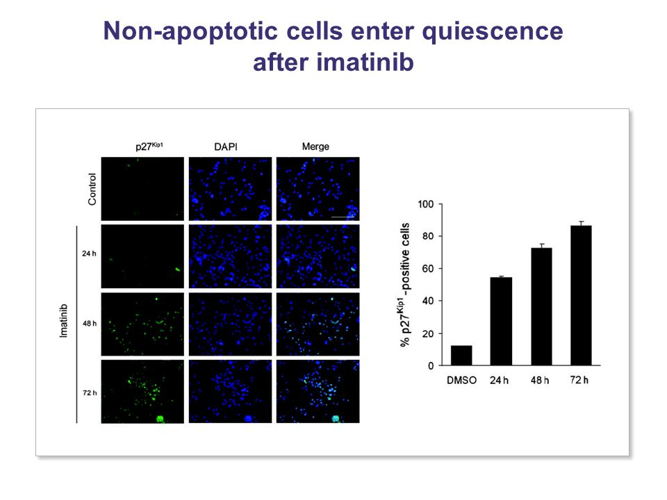 Non-apoptotic cells enter quiescence after imatinib