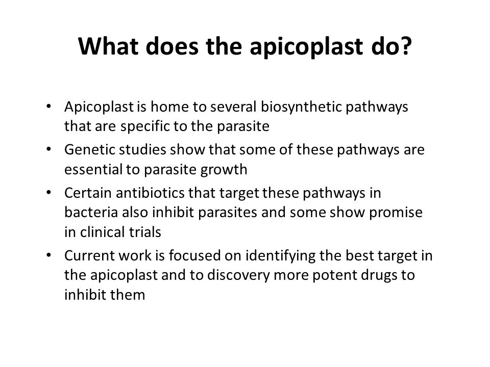 What does the apicoplast do.