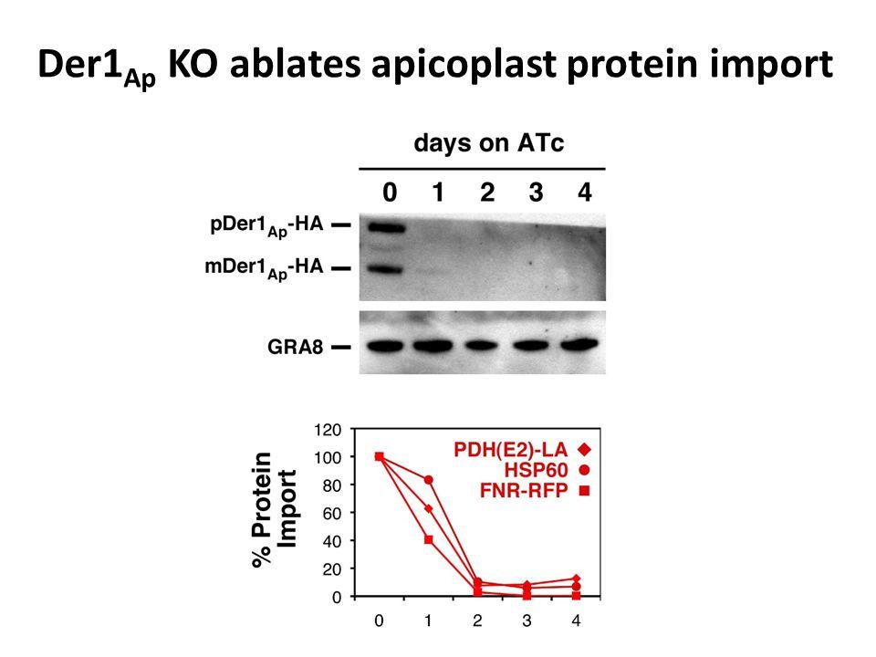 Der1 Ap KO ablates apicoplast protein import