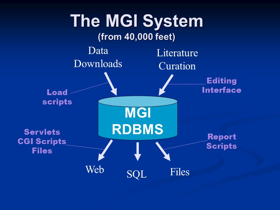 The MGI System (from 40,000 feet) MGI RDBMS Web Files Data Downloads Literature Curation SQL Load scripts Editing Interface Servlets CGI Scripts Files Report Scripts
