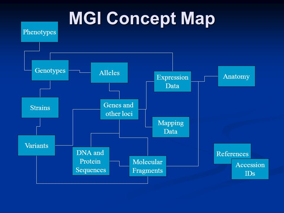 MGI Concept Map Genes and other loci Expression Data Mapping Data Molecular Fragments DNA and Protein Sequences Strains Phenotypes Anatomy Genotypes Alleles References Accession IDs Variants